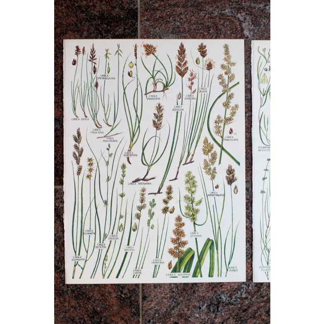 Mid-Century Modern Vintage Botanical Wheat Prints - A Pair For Sale - Image 3 of 7