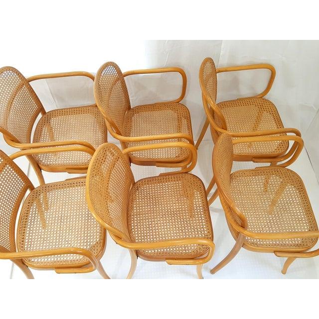 Orange Vintage Stendig Cane Bentwood Dining Chairs- Set of 6 For Sale - Image 8 of 12