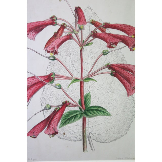 20th Century Realist Pink Botanical Print For Sale In New York - Image 6 of 7