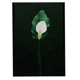 Calla Lily Color Photograph by Garo For Sale