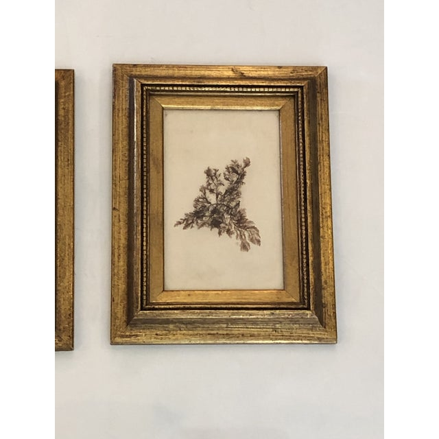 Wood 19th Century Pressed Organic Botanicals in Giltwood Frames -Set of 3 For Sale - Image 7 of 11