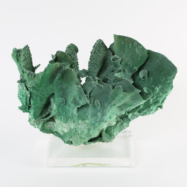 15th Century & Earlier VINTAGE GREEN CORAL SPECIMEN MOUNTED ON A LUCITE STAND For Sale - Image 5 of 10