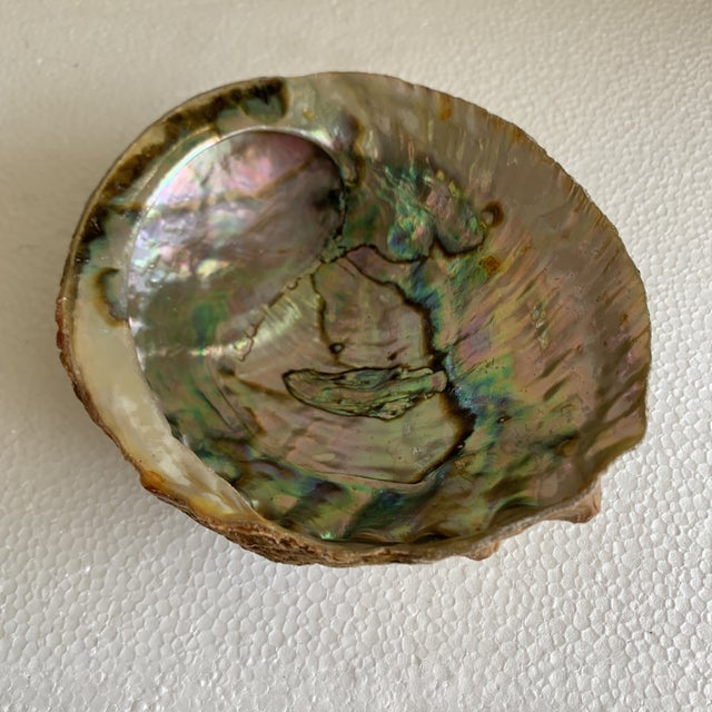 Abalone Natural Vintage Abalone Shell For Sale - Image 7 of 9