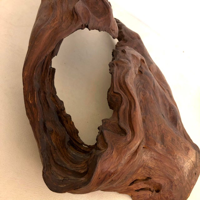 Redwood Naturally Formed Sculpture For Sale - Image 10 of 11