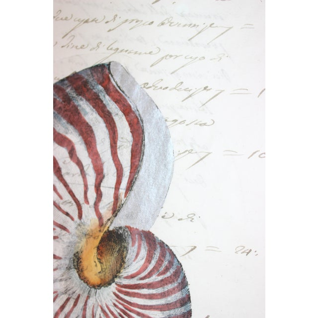 Hand Painted Nautilus Shell on Parchment For Sale - Image 9 of 10