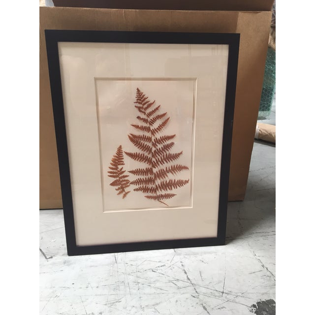 Natural Pressed Botanical in Frame | Chairish