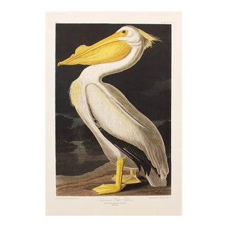 1990s American White Pelican by Audubon, Large American Classical Print For Sale