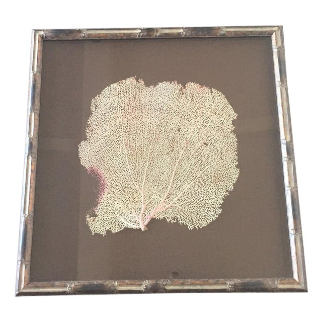 Coral Sea Fan in Bamboo Frame - Image 1 of 5
