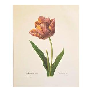 Pierre-Joseph Redouté Reproduction Tulip Botanical Print For Sale