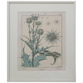 Image of Botanical Prints