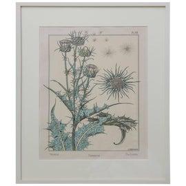 Image of Botanical Prints