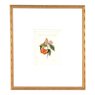 18th Century Handcolored Butterfly Botanical Lithograph, Framed For Sale