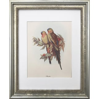 Princess of Wales Parakeet/Parrot Print by Gould For Sale