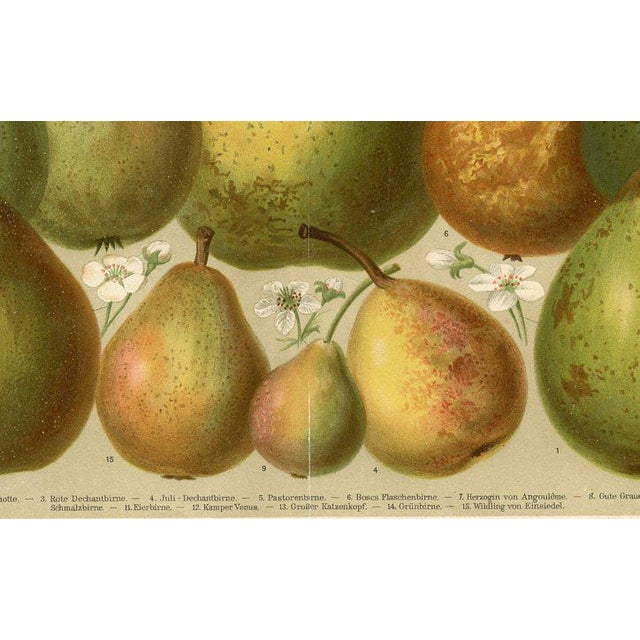 Illustration Late 1800s Pears Lithograph Print For Sale - Image 3 of 3