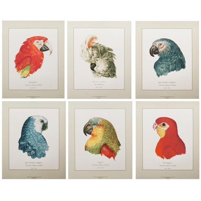 Anselmus De Boodt & Aert Shoumann, 16-18th C. Parrot Head Study Prints - Large Set of 6 For Sale - Image 9 of 10