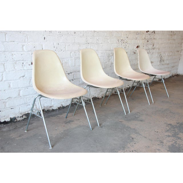 Charles Eames for Herman Miller DSS Stacking Chairs in Parchment - Set of 4 - Image 2 of 9