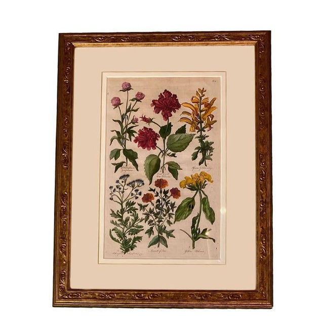 """Original hand colored copperplate engraving from England by John Hill. England, 1756 - 57 12"""" Wide x 16"""" High x 1"""" Deep"""