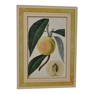 Vintage Hand Colored Botanical Engraving