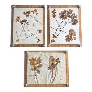 1909 Antique Framed Botanical Pressings - Set of 3 . For Sale