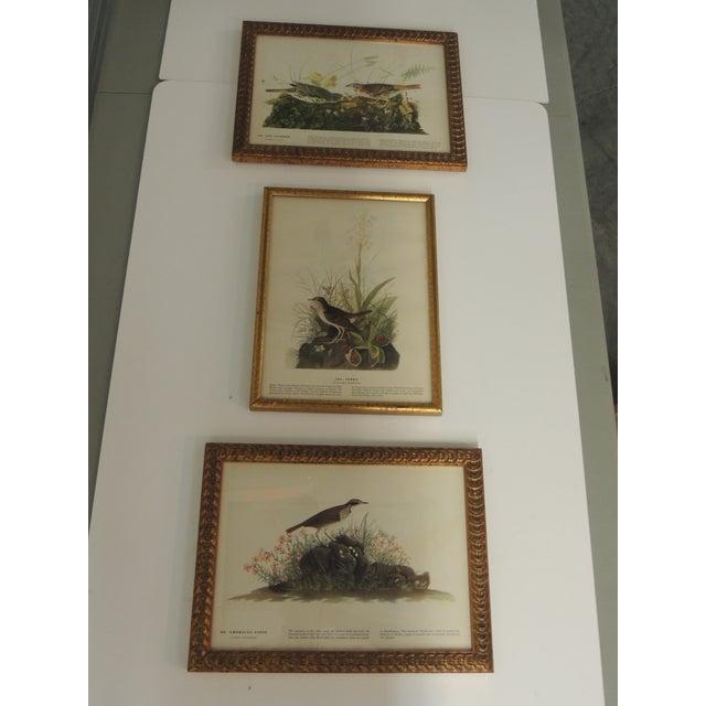 Gold Leaf Set of 3 Bird Prints Framed in Gold Frames For Sale - Image 7 of 7