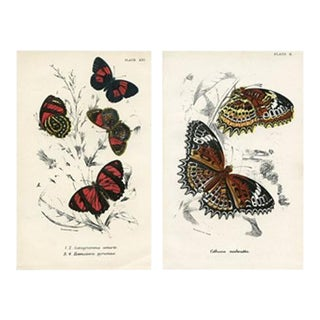 """Ice Wing and """"88"""" Butterfly Prints, Pair, 1896 For Sale"""