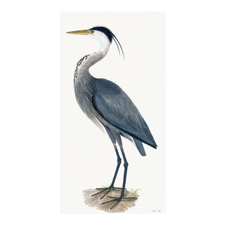 Great Blue Heron Styled After Olof Rudbeck - Plate 36 (Cfa-Wd) For Sale