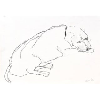 """""""Terrier Dog"""" Contemporary Abstract Figurative Drawing by Martha Holden For Sale"""