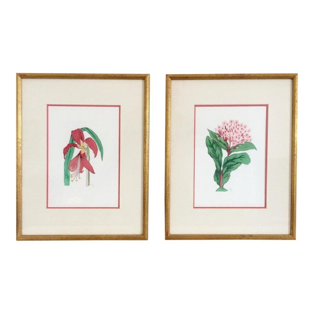 Pair of Botanical Chelsea House Flower Study Gallery Wall Drawings in Matching Gilt Frames For Sale