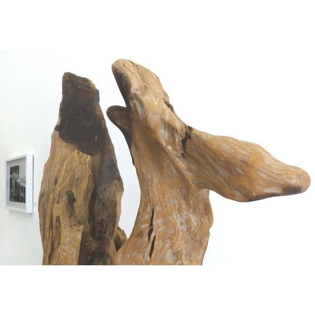 """""""Kangaroo"""" a Petrified Wood Sculpture from the Amazon by Artist Valeria Totti For Sale - Image 4 of 11"""
