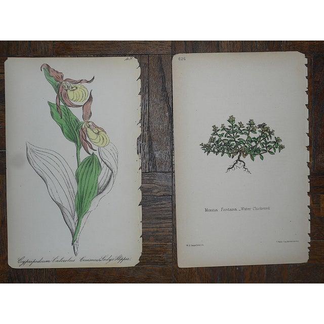 Antique Botanical Lithographs - Set of 8 For Sale - Image 4 of 6