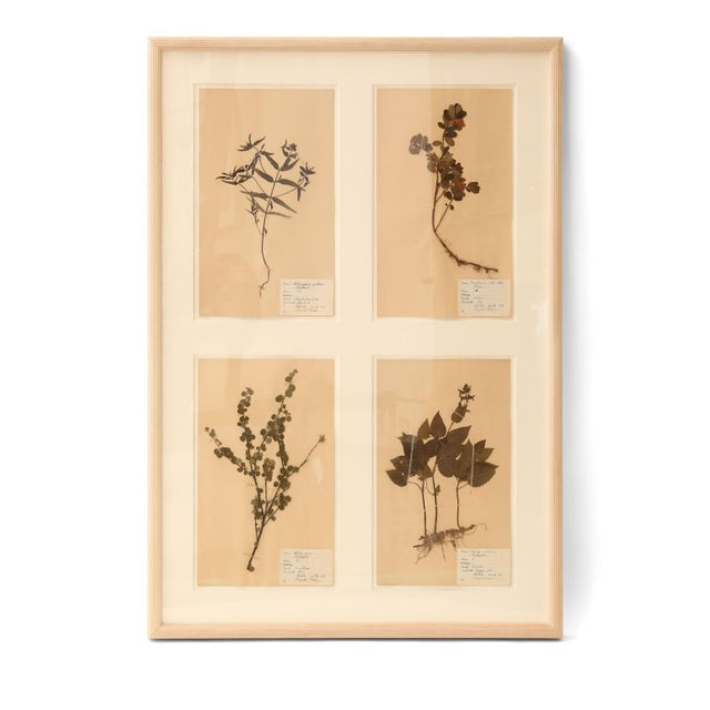 Framed Set of Four Herbaria For Sale In Houston - Image 6 of 12