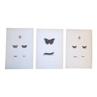 Antique 19th C. Lithographs-Butterflies -Period Hand Color - Set of 3 For Sale