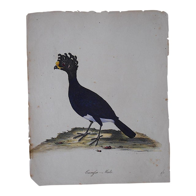 George Edwards 18th Century Bird Engraving For Sale