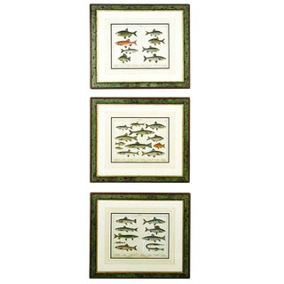 1880s Trio Schubert German Lithographs of Aquatic Life - Set of 3 For Sale