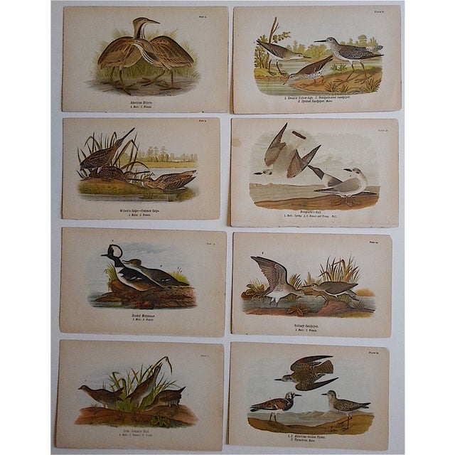Realism Antique American Bird Lithographs - Set of 8 For Sale - Image 3 of 3