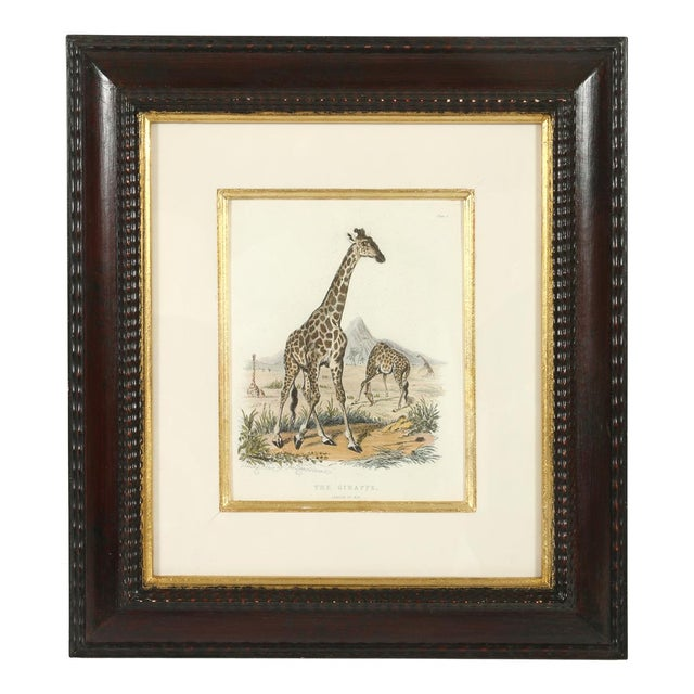 A set of three animal prints, a giraffe, a moose and an elephant. Each is set in a mahogany frame.