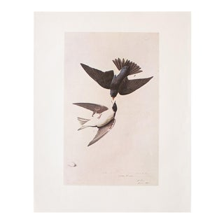 White-Bellied Swallow by John James Audubon, 1966 Lithograph For Sale