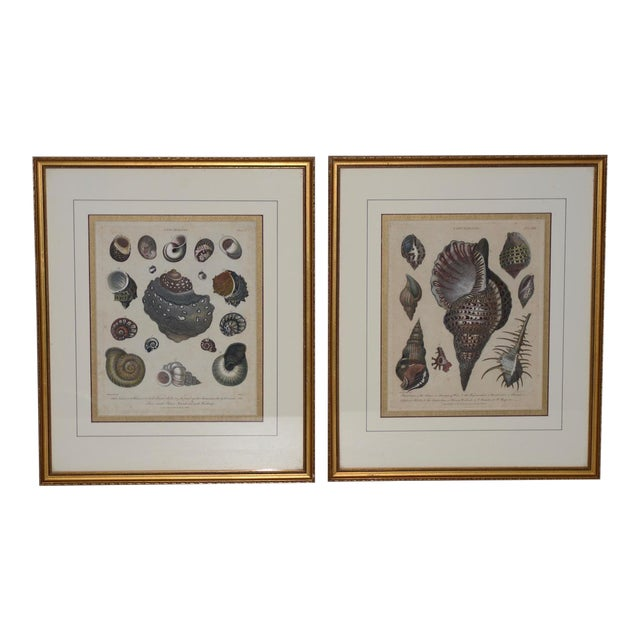 "Pair of Early 19th Century ""Conchology"" Color Etchings C.1802 For Sale"