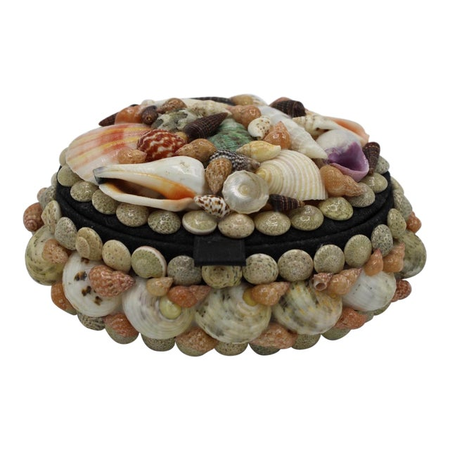 Mid 20th Century Vintage Organic Seashell Jewelry Treasure Box For Sale
