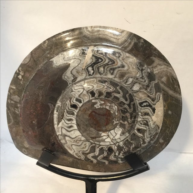 Fossil on Stand For Sale - Image 7 of 9