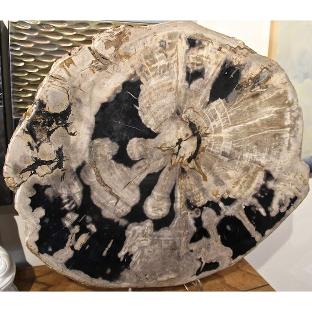 Petrified Wood Slab - Image 2 of 3