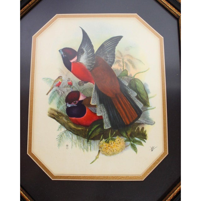 Realism Framed European Ornithological Prints in the Manner of John James Audubon - a Pair For Sale - Image 3 of 5