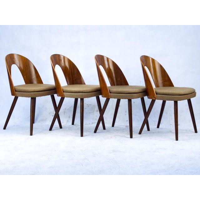1960s Antonín Šuman for Tatra Nabytok Np Dining Chairs- Set of 4 For Sale - Image 4 of 6