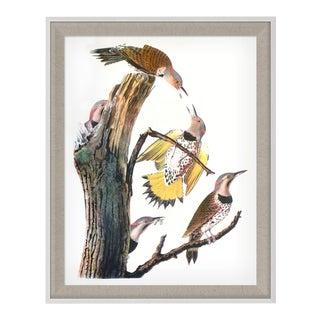 Audubon 4, Framed Artwork For Sale