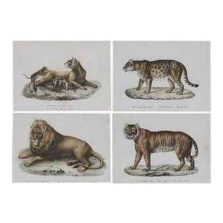 Four Framed Prints of Lions and Tigers , Brodtman, Swiss, 19th C For Sale