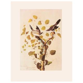 1960s Loggerhead Shrike by John James Audubon Vintage Cottage Print For Sale