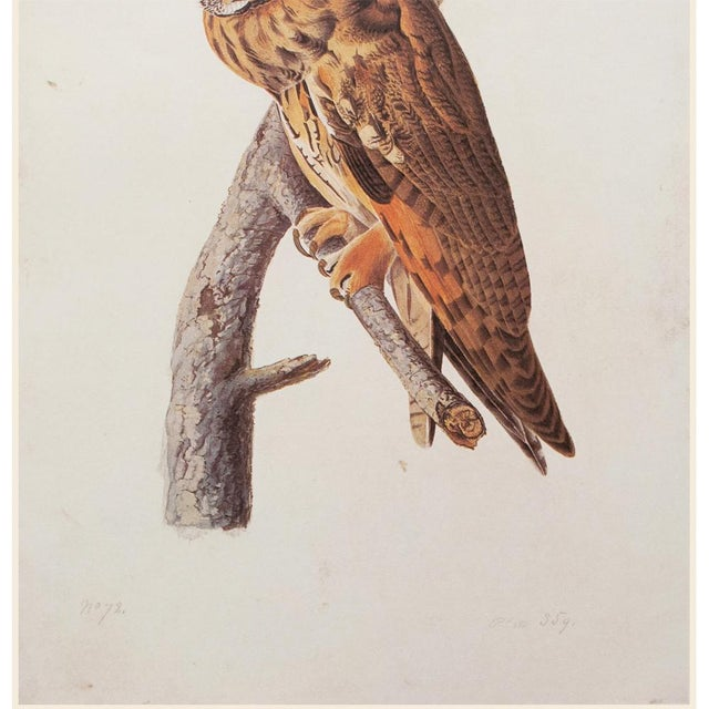 John James Audubon Stunning Long-Eared Owl by John J. Audubon, Vintage Cottage Print For Sale - Image 4 of 10