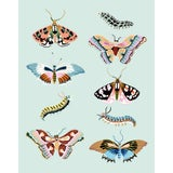 Image of Wondergarden Butterfly Mini Giclee Print by Sarah Gordon For Sale