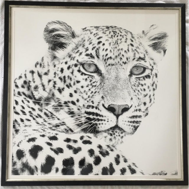 Brand new black and white cheetah photograph. Perfect for a large wall to add personality and pattern.