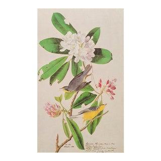 Canada Flycatcher by Audubon, Vintage Cottage Print For Sale